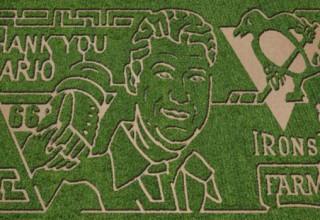 Lemieux Corn Maze